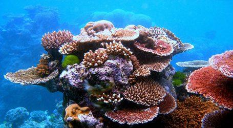 Great Barrier Reef should go on list of endangered world heritage